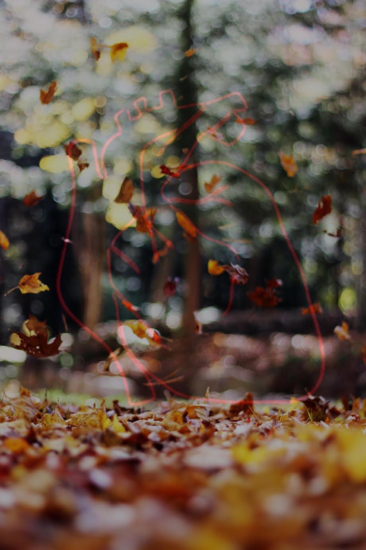 Yaprak Dökümü Gibi Yüreğim | Şiir | Blog
